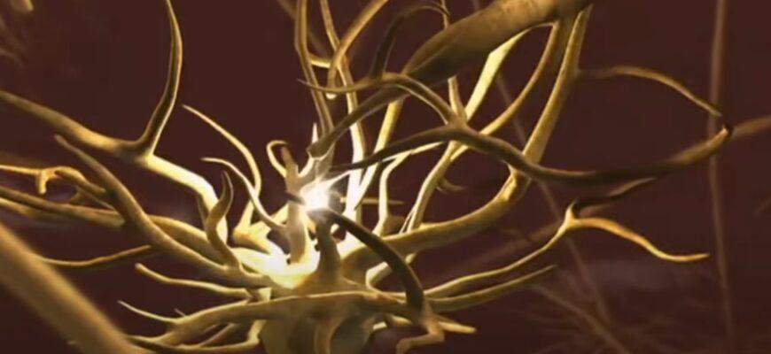 Начальные симптомы болезни Альцгеймера