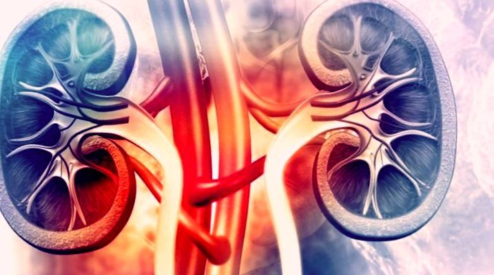 Основные проявления гломерулонефрита