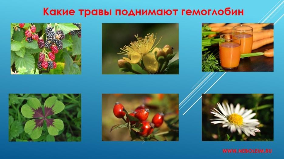 Какие травы поднимают гемоглобин
