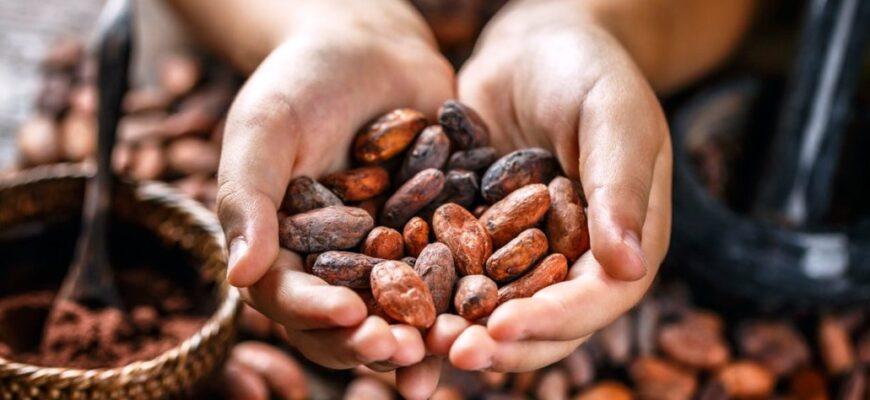 Польза какао для здоровья мужчин